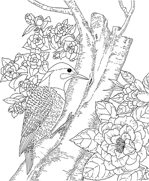 yellowhammer bird coloring pages - photo #3