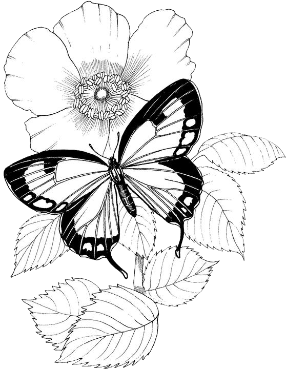Hexagon Freezer Paper Templates further Butterfly Coloring Page12 besides Floral37 also Swedish Royal Crown Historic Symbols Of Monarchy And Rank 1054024 besides Octopus Kraken V1 Knit Chart. on free knitting patterns
