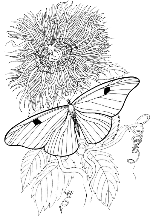 butterfly eggs coloring pages - photo#10