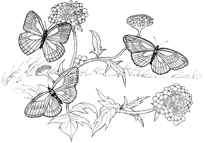 butterfly eggs coloring pages - photo#31