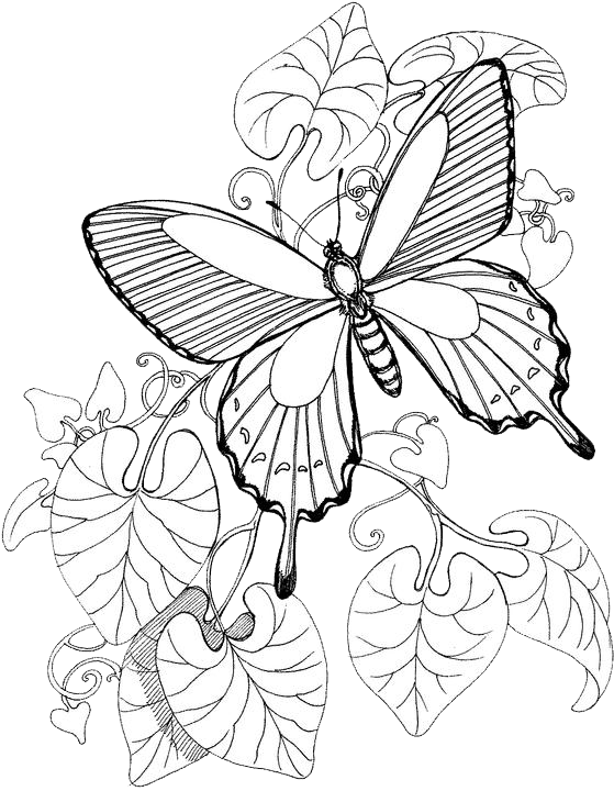Free coloring pages of butterfly pattern