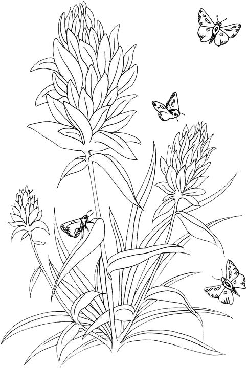 Butterfly Coloring Pages 42 Purple Kitty