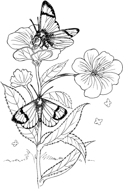 Butterfly Coloring Pages 6 Purple Kitty