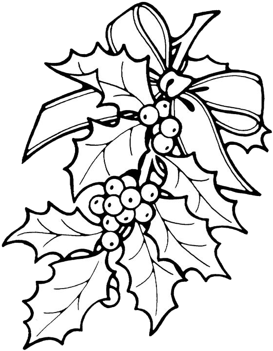 Christmas Flower Line Drawing : Christmas holly coloring pages purple kitty