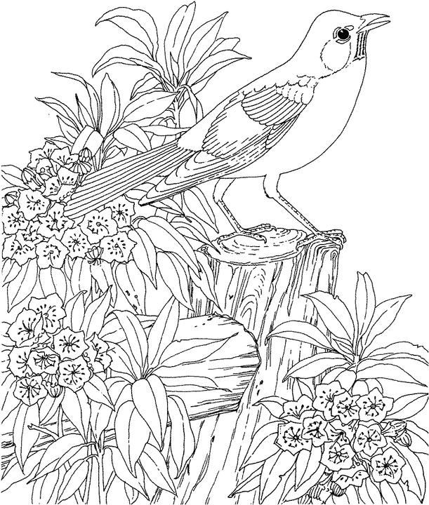 Connecticut Robin Coloring Page