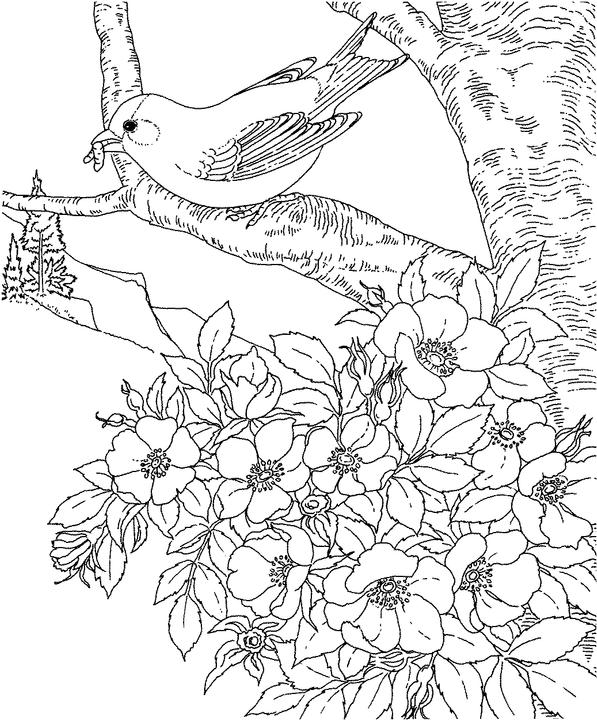 Iowa Eastern Goldfinch Coloring Page Purple Kitty