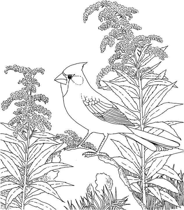 purple bird colouring pages