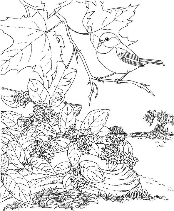 Massachusetts Chickadee Coloring Page | Purple Kitty