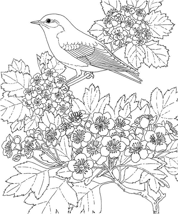 Missouri Bluebird Coloring Page Purple Kitty