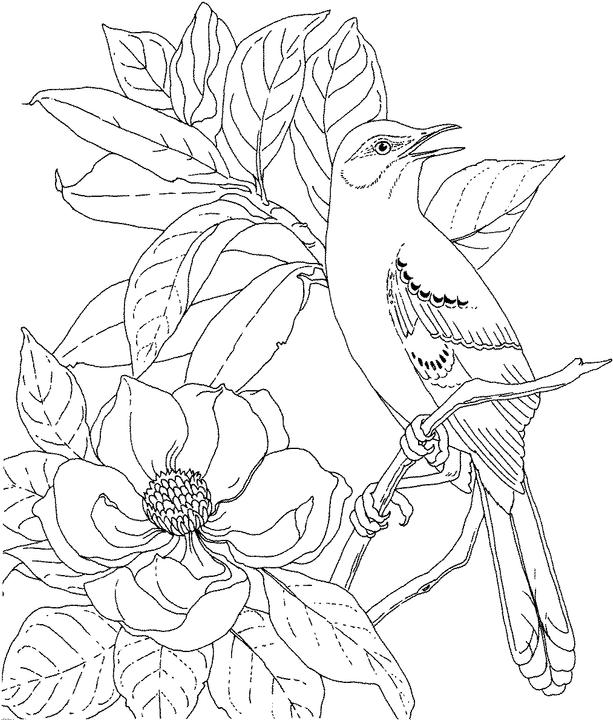 Mississippi mockingbird coloring page purple kitty for Mockingbird coloring page