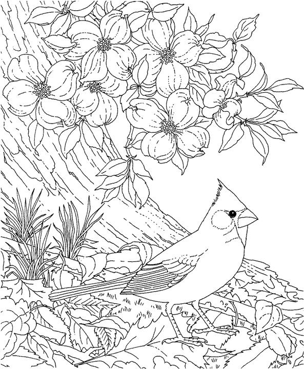 free coloring pages of nc state