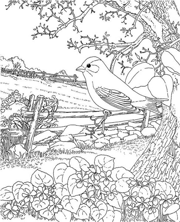 New Jersey Eastern Goldfinch Coloring Page Purple Kitty