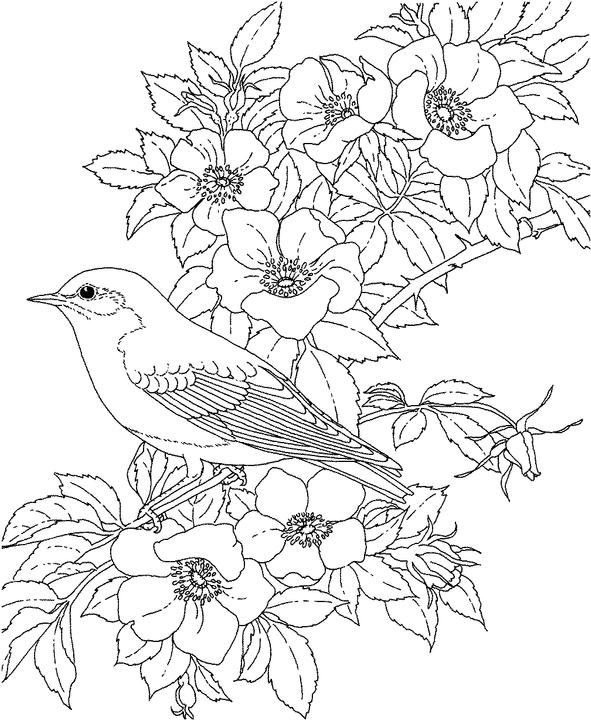 New york bluebird coloring page purple kitty for Blue bird coloring pages