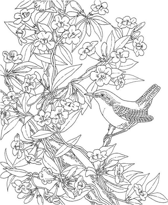 Wren Coloring Page   Coloring Pages