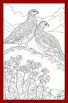 state birds coloring pages