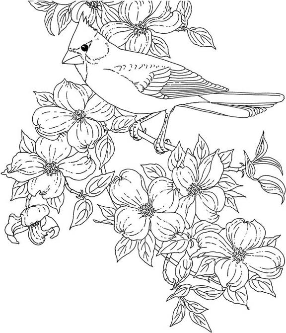 Coloring Pages For State Flowers : Virginia cardinal coloring page purple kitty
