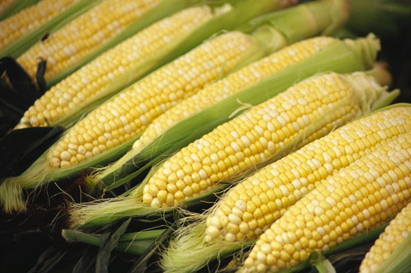 a look at the staple food in the united states corn Types of food crops and their contribution and find out how many tons were harvested of the crop in the united states in oregon state university.