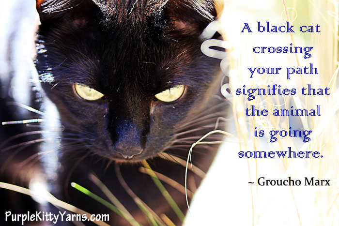A Black Cat Crossing Your Path Signifies That The Animal